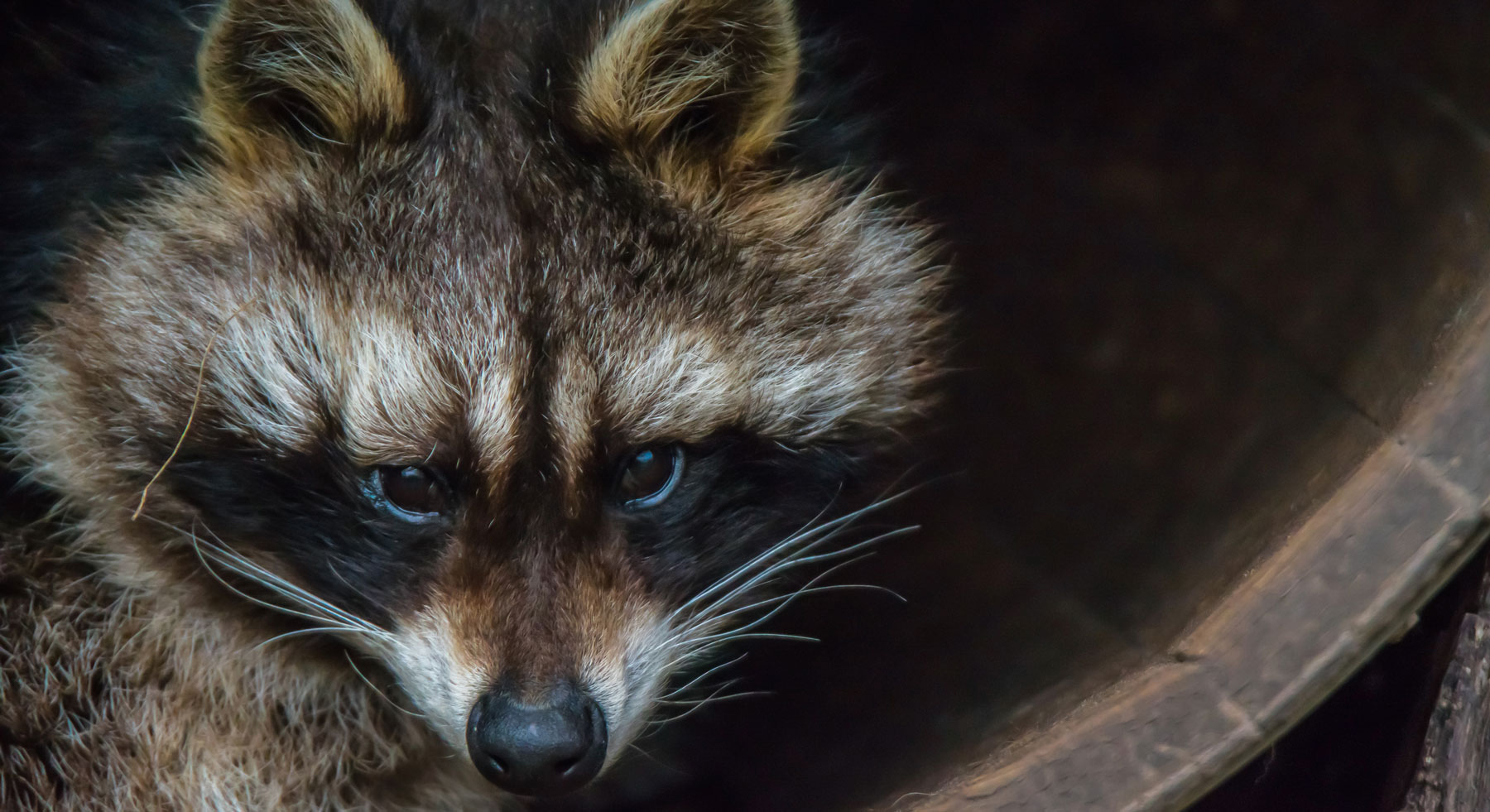 Critter Wranglers Acworth Ga Squirrel Rodent Bat